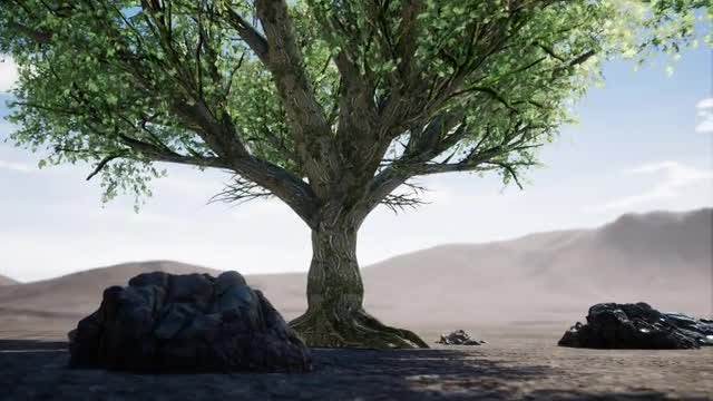 Big Tree In Arid Desert: Stock Motion Graphics