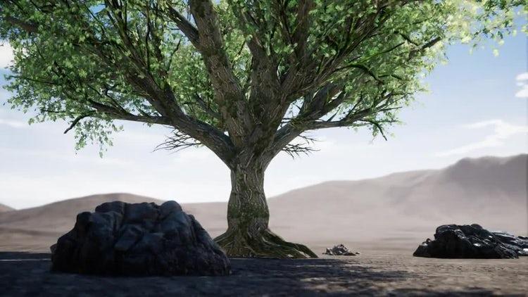 Big Tree In Arid Desert: Motion Graphics