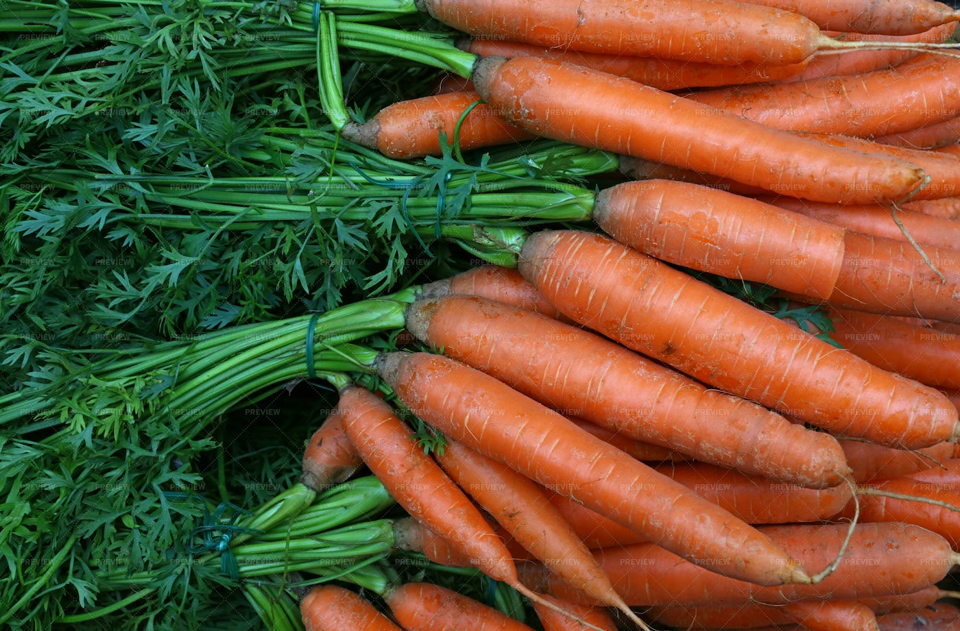 Bunches Of Fresh Carrots: Stock Photos