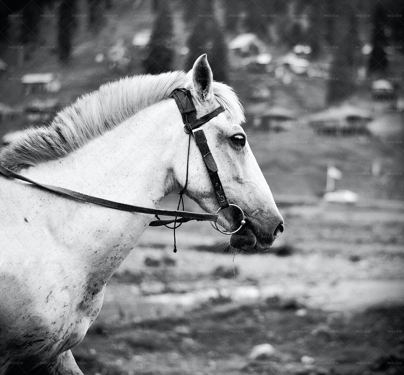 Portrait Of Horse: Stock Photos