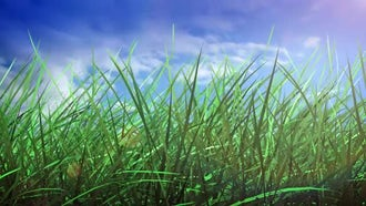 Grass And Sky: Motion Graphics