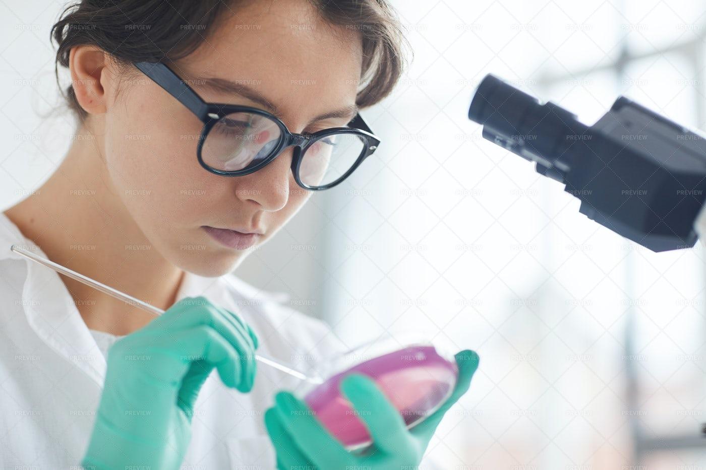 Young Woman Holding Petri Dish: Stock Photos