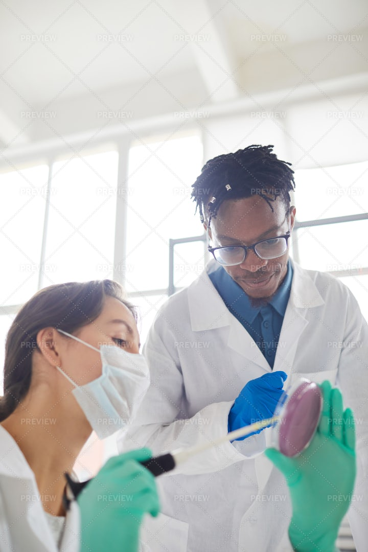 Scientists Working In Laboratory: Stock Photos