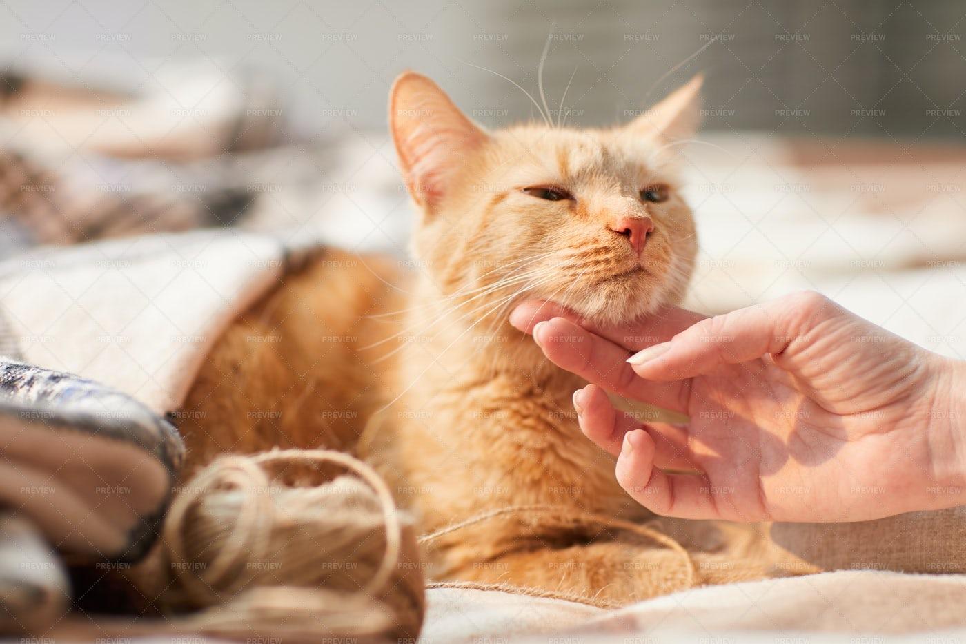 Young Woman Stroking Ginger Cat: Stock Photos