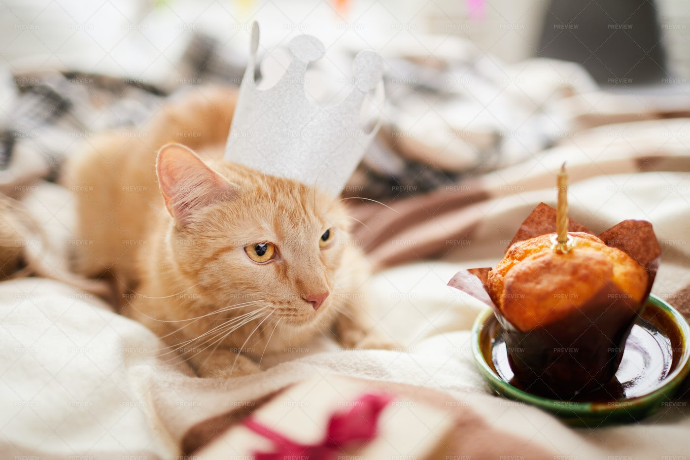 Cat Birthday: Stock Photos