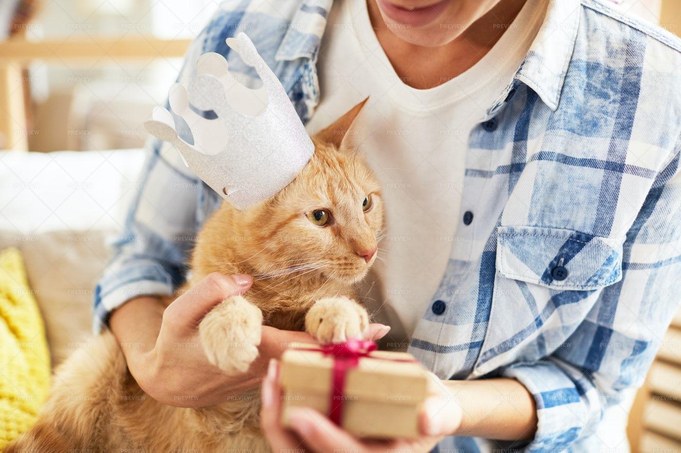 Present For Cat: Stock Photos