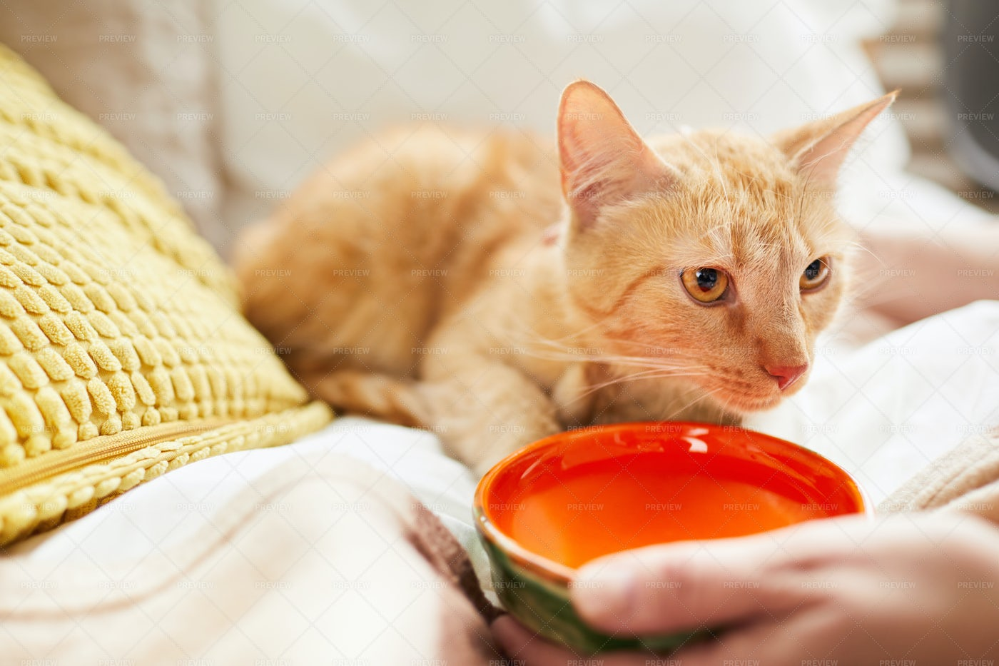 Giving Water To Cat: Stock Photos