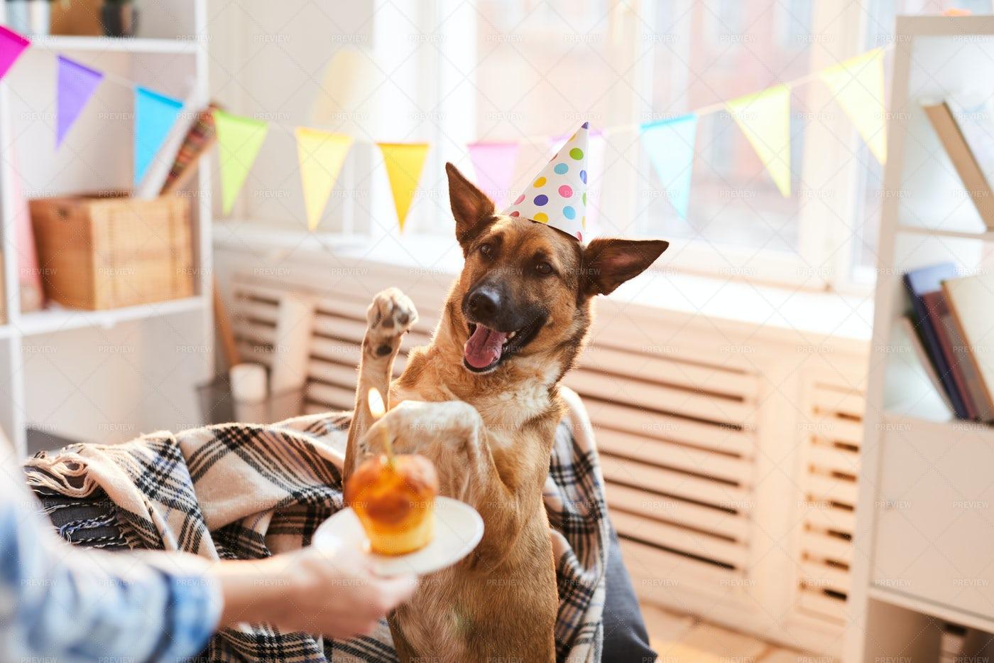 Birthday Cake For Dog: Stock Photos