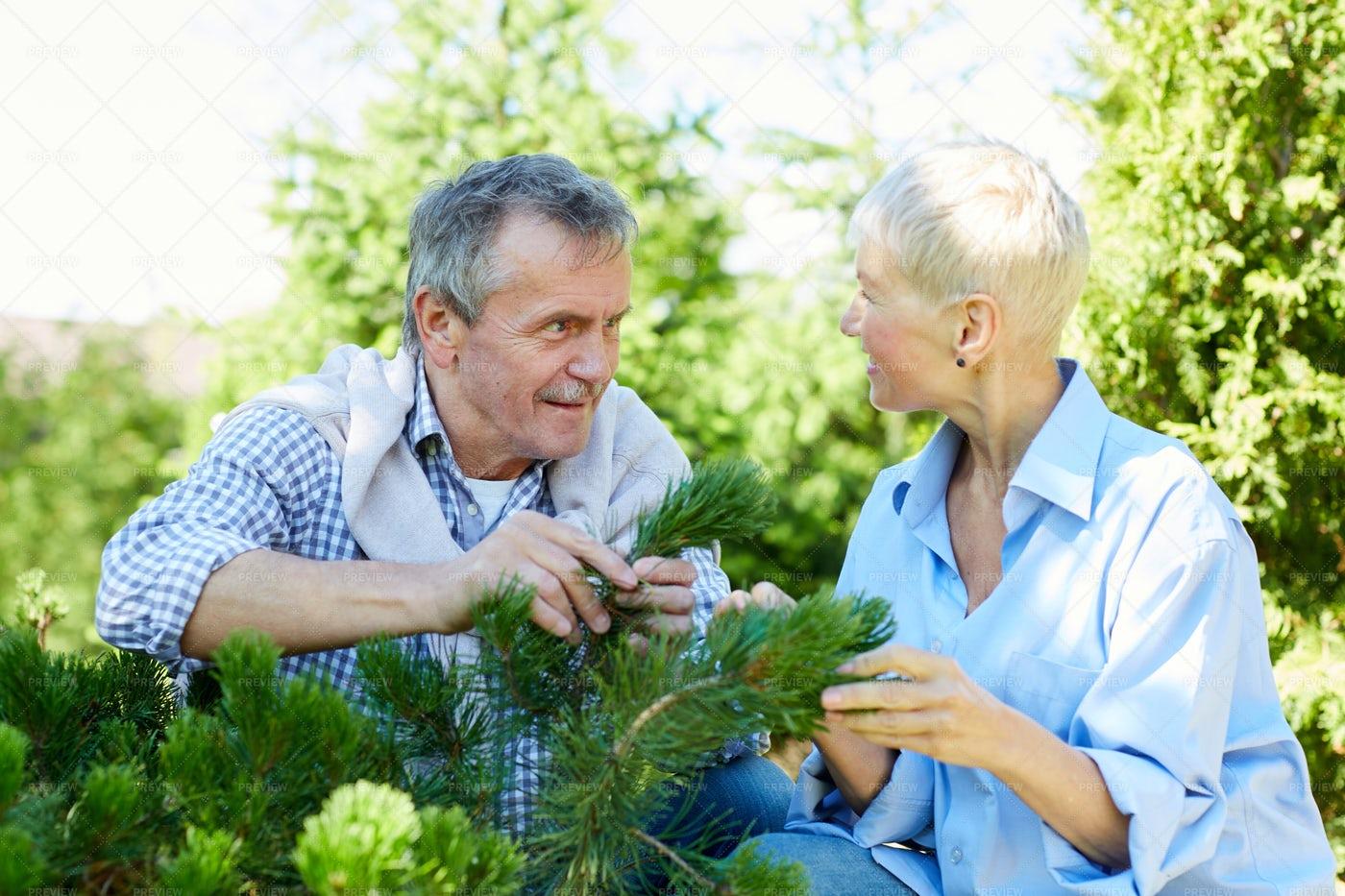 Senior Couple Gardening: Stock Photos