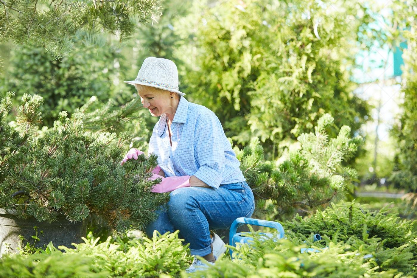 Senior Woman Gardening: Stock Photos