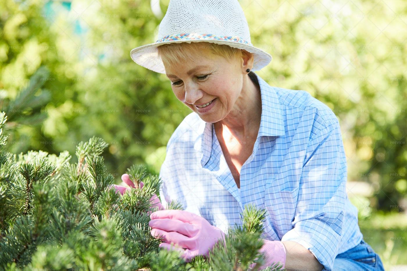 Smiling Senior Woman Gardening: Stock Photos