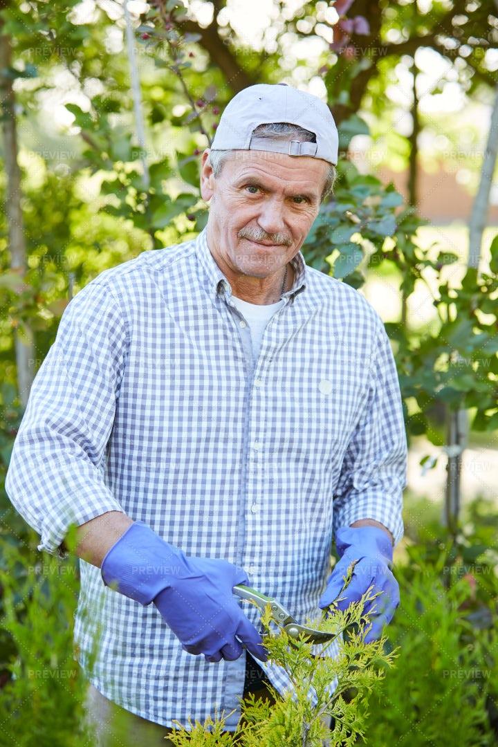 Gardener Cutting Shrubs: Stock Photos