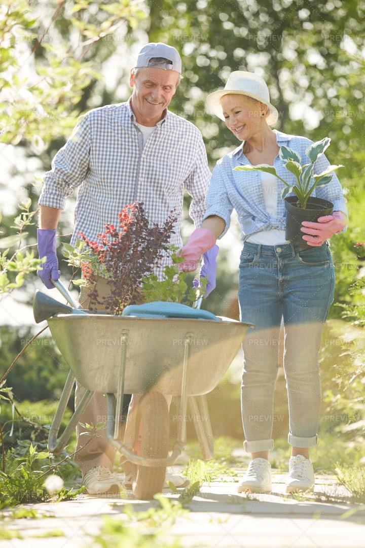 Two Gardeners In Sunlight: Stock Photos