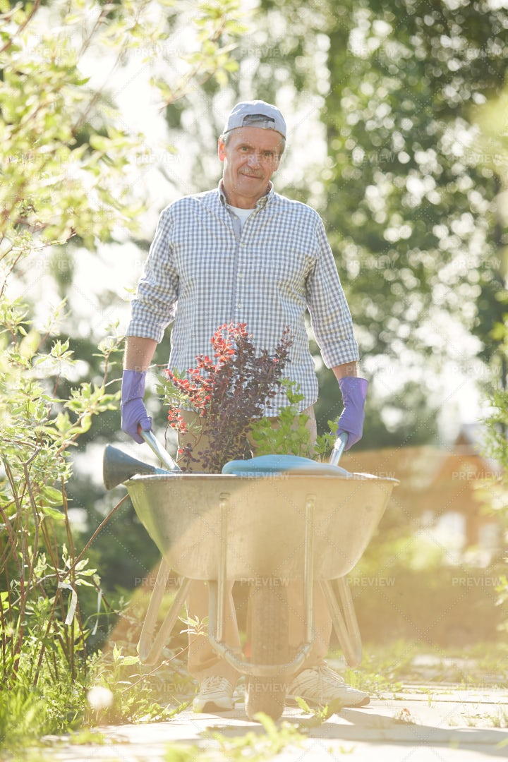 Gardener Pushing Wheelbarrow: Stock Photos