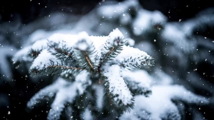 Christmas Snowflakes: Motion Graphics