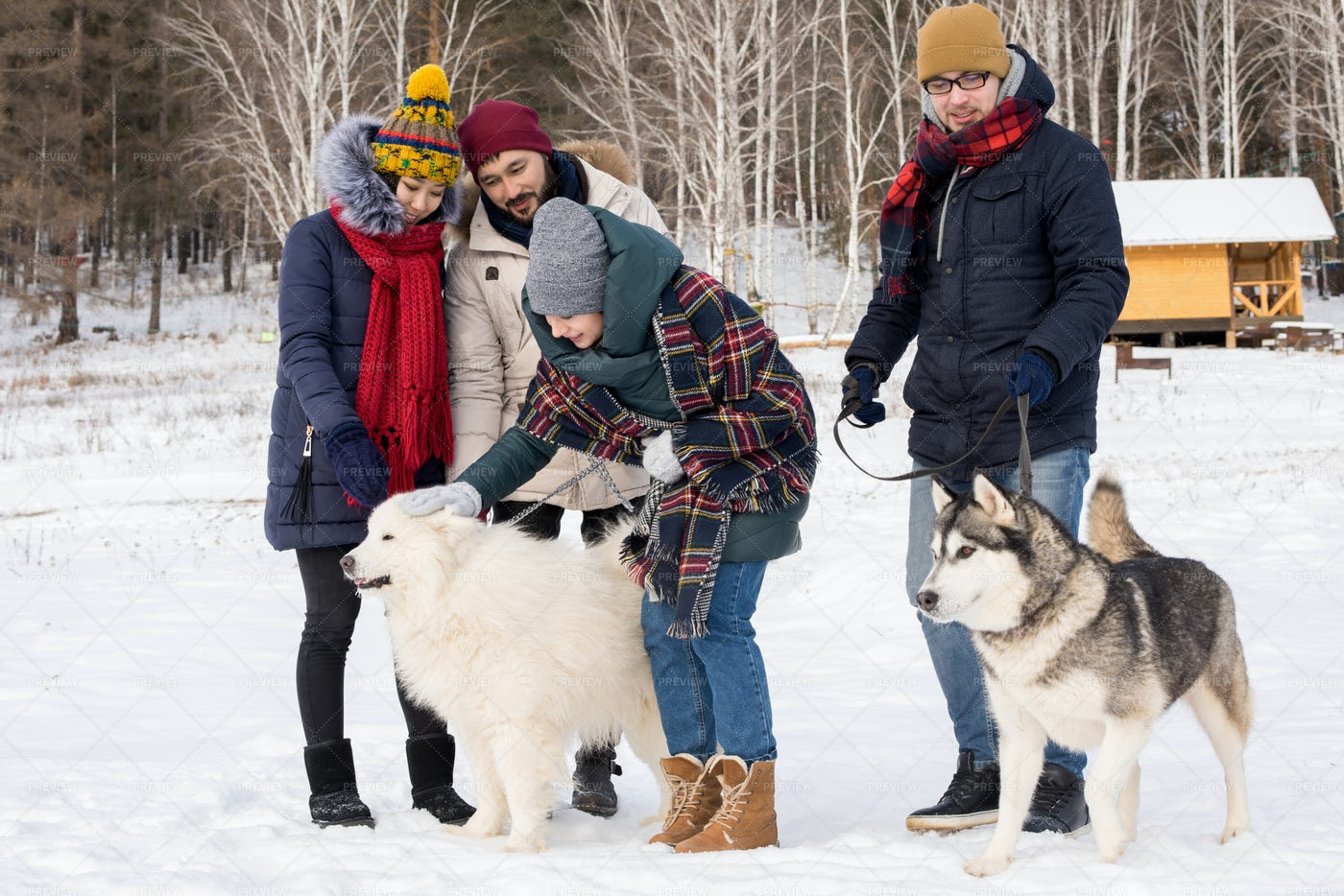 Young People Playing With Husky...: Stock Photos