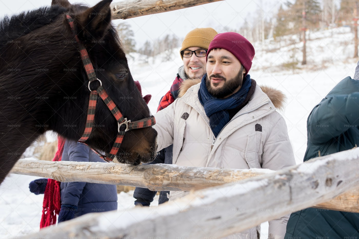 Young People Petting Horses On...: Stock Photos