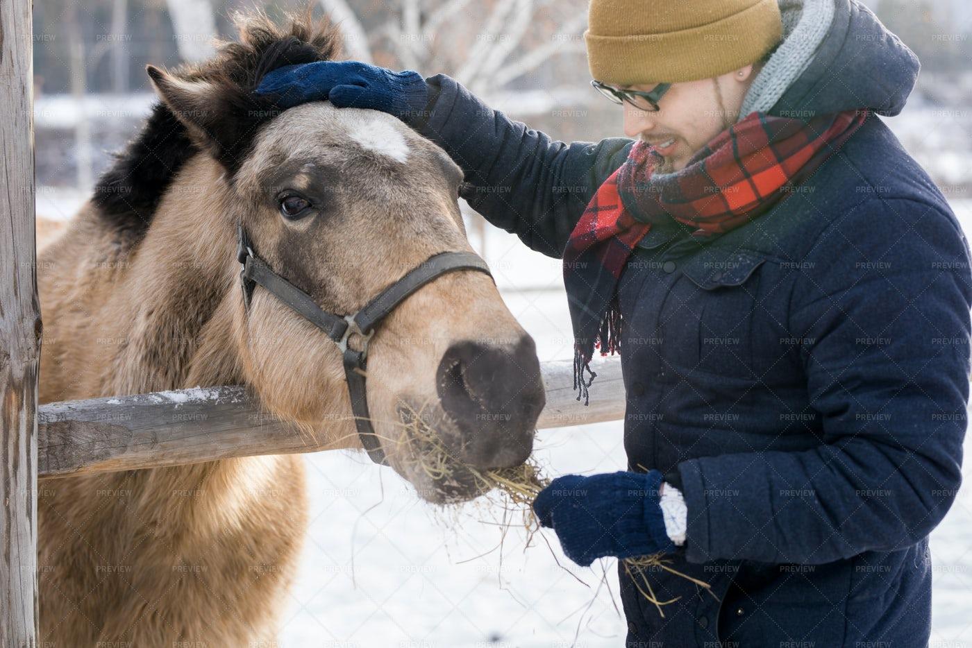 Man Feeding Horse On Ranch: Stock Photos