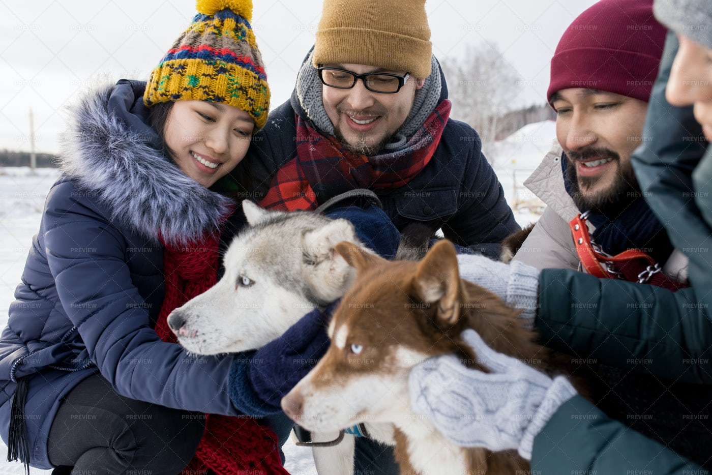 Young Couples Playing With Husky...: Stock Photos