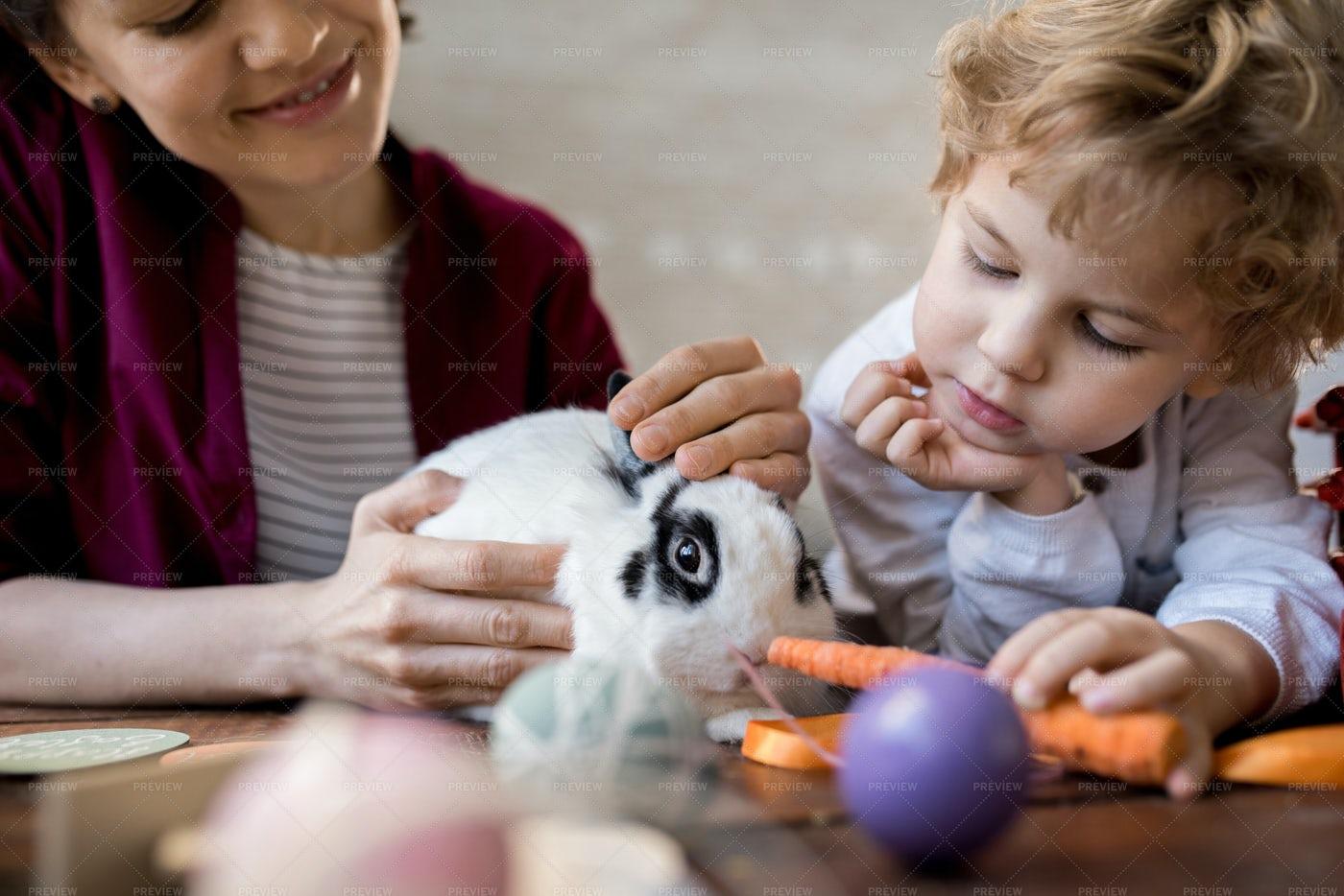 Little Boy Feeding Pet Bunny: Stock Photos