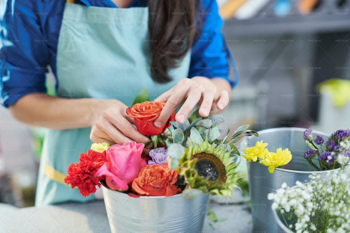 Young Woman Arranging Rose...: Stock Photos