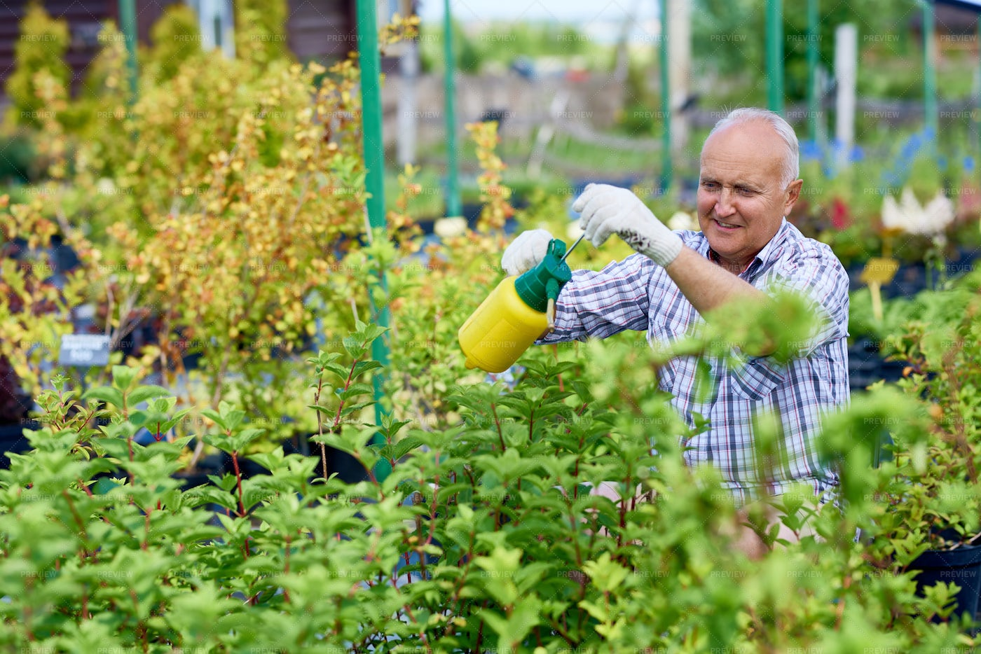 Senior Man Caring For Plants In...: Stock Photos