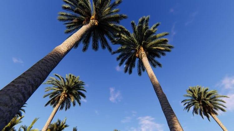 Palms Land 2: Stock Motion Graphics
