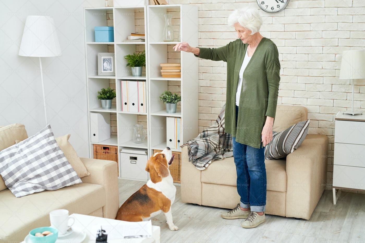 Senior Woman Playing With Dog: Stock Photos