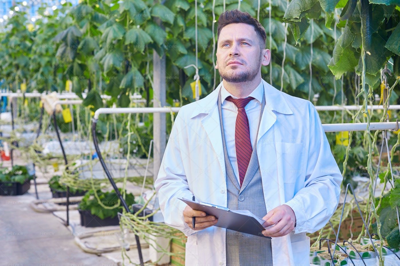 Handsome Scientist In Greenhouse: Stock Photos