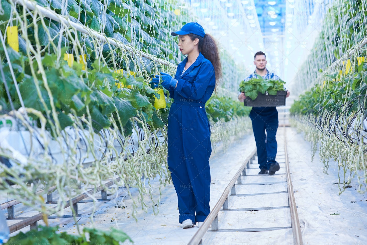 Modern Plantation Workers: Stock Photos