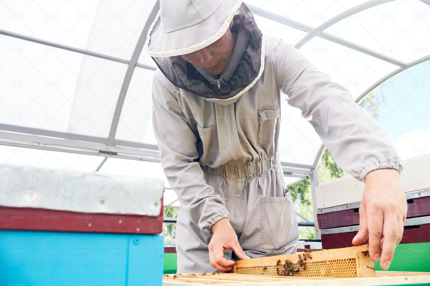 Young Beekeeper In Apiary: Stock Photos