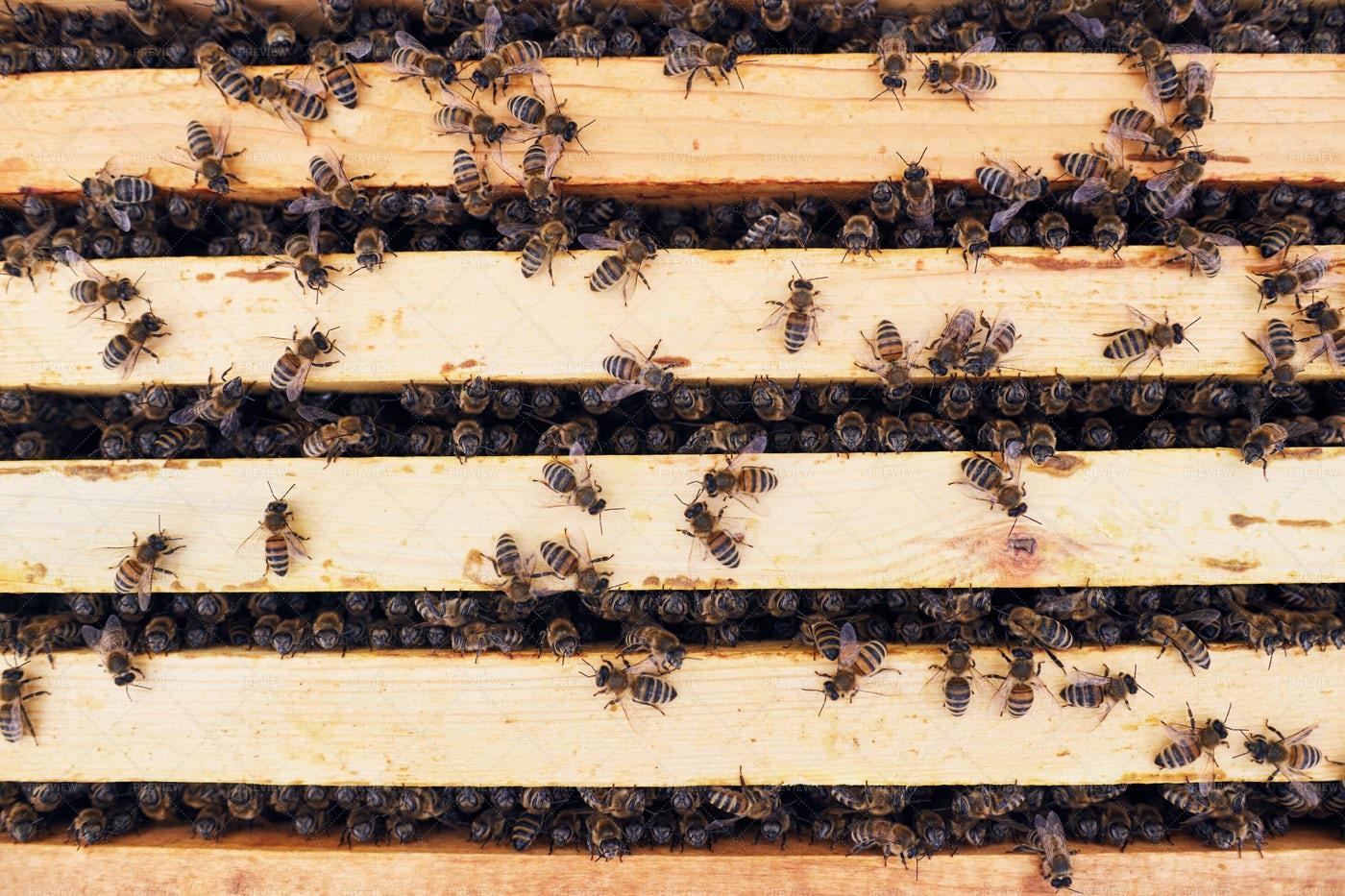 Honey Bees In Apiary: Stock Photos