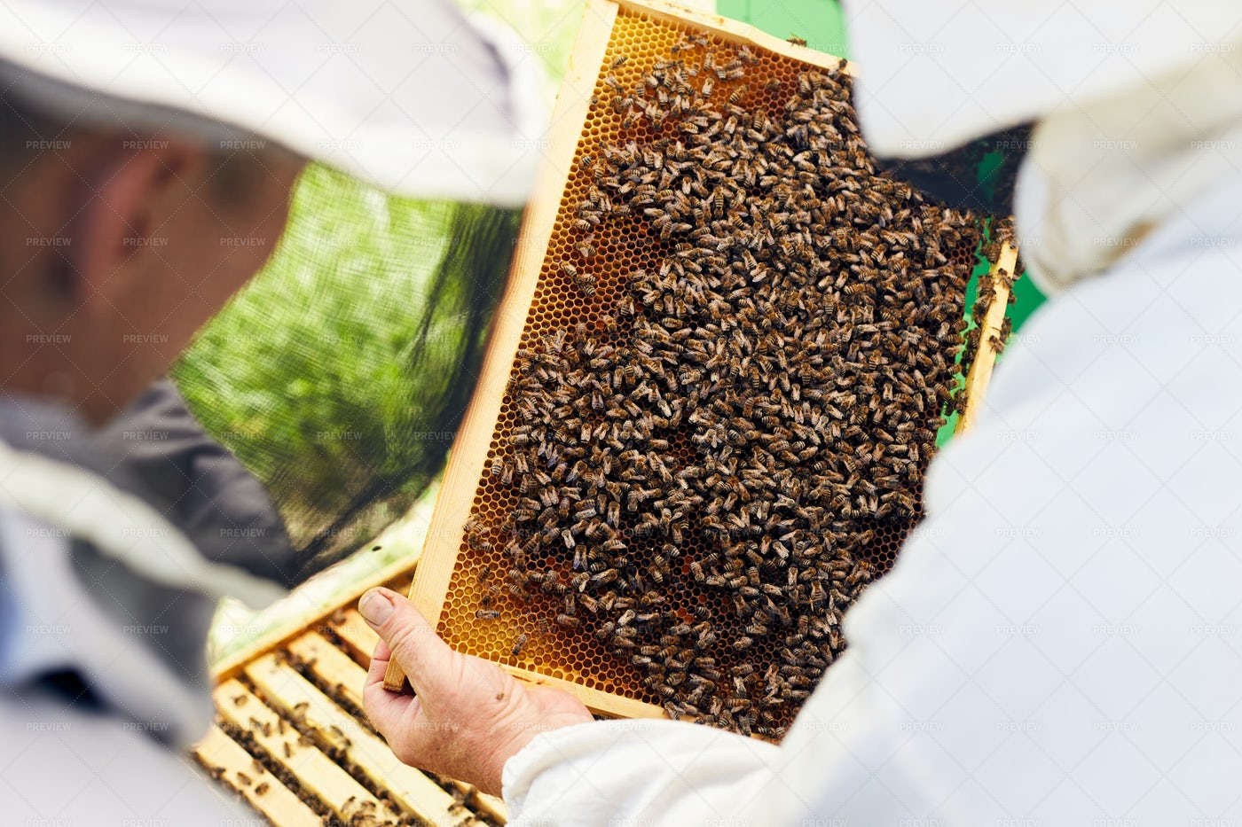 Beekeepers Inspecting Hive: Stock Photos