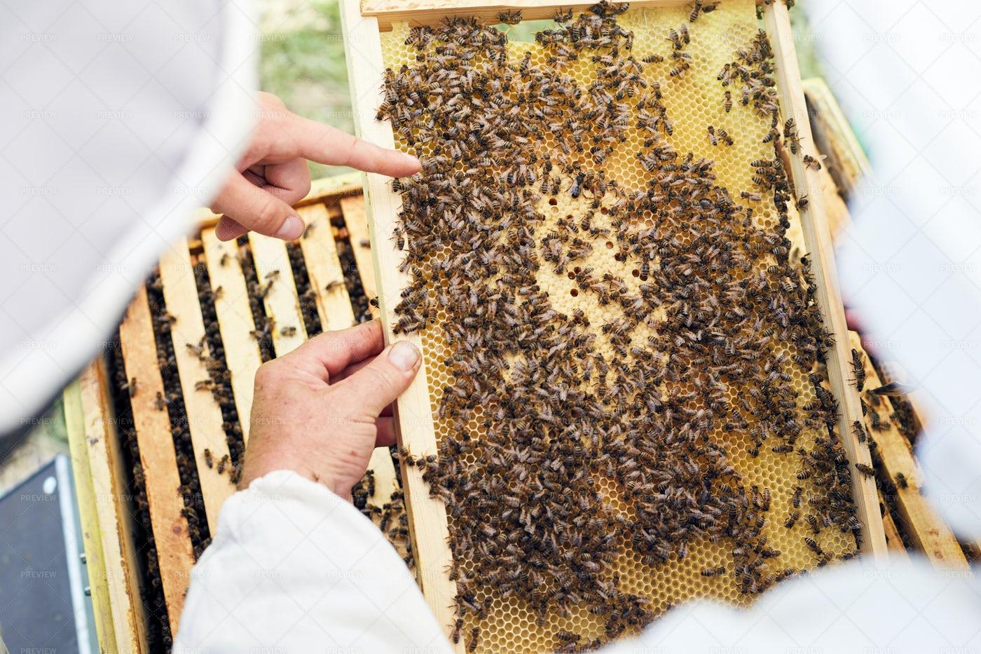 Beekeepers Examining Hive: Stock Photos