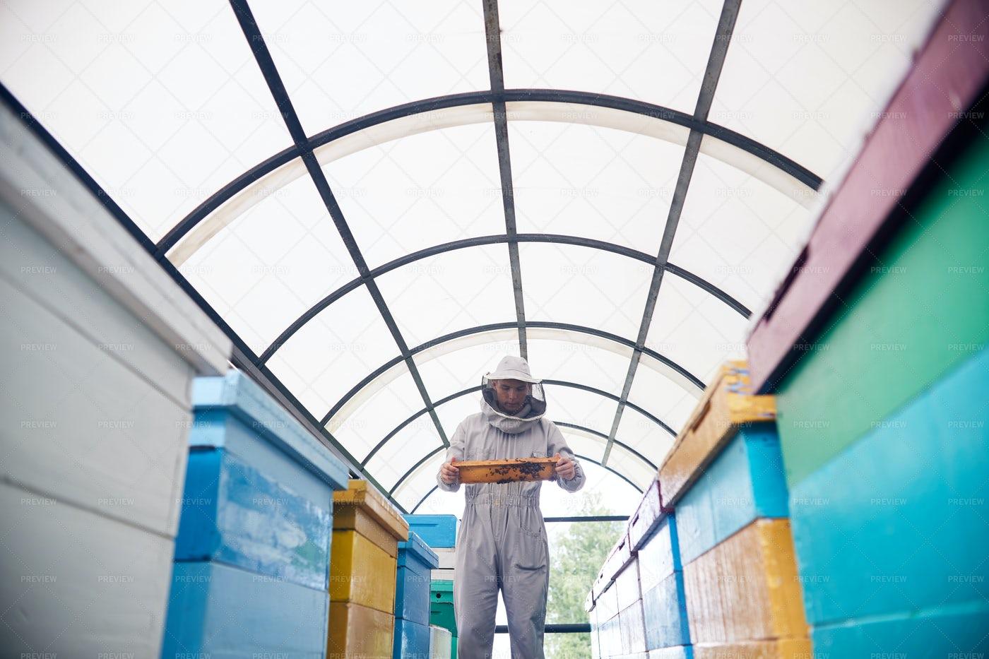 Beekeeper In Modern Apiary: Stock Photos
