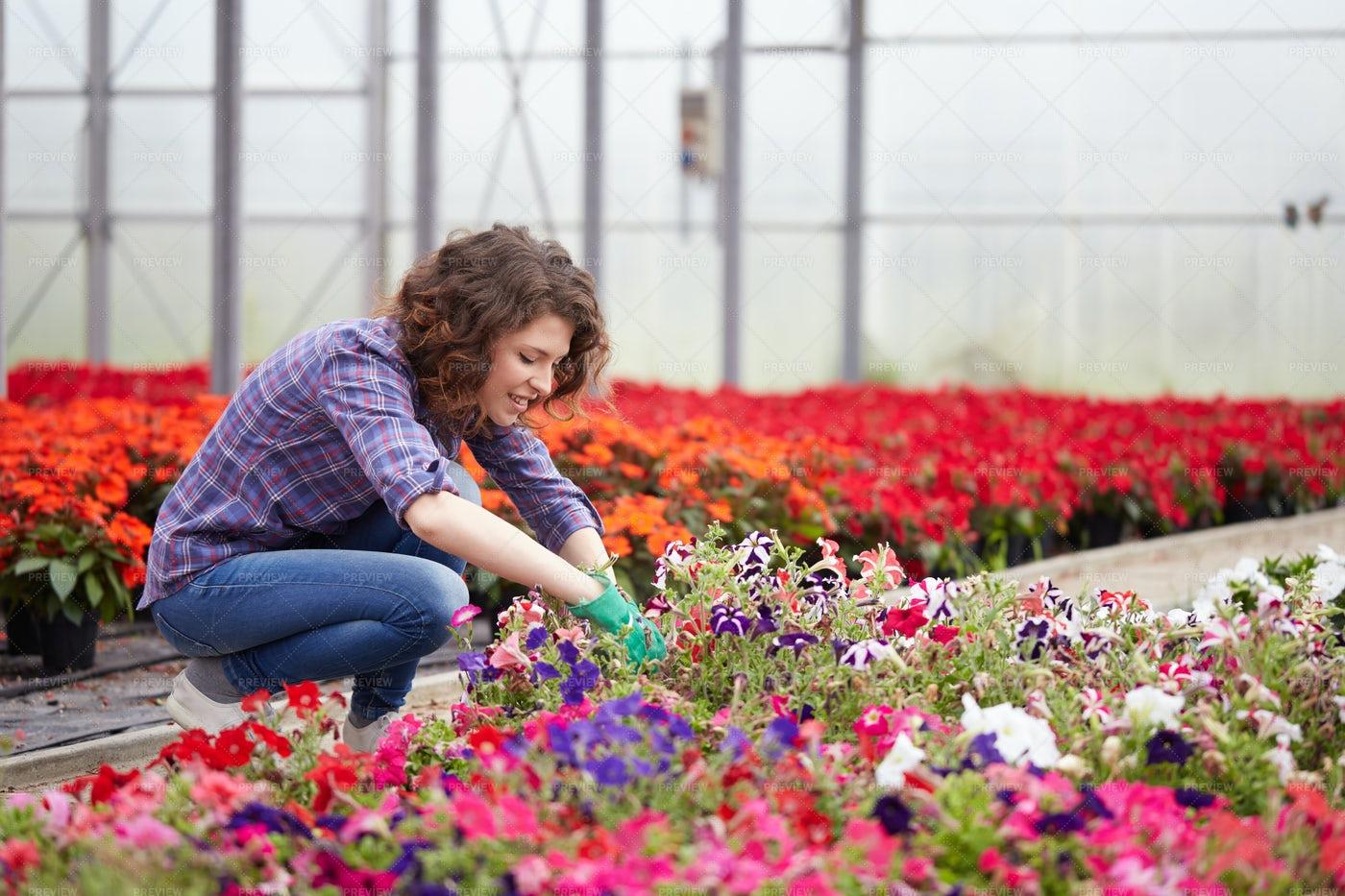 Woman Trimming Plants: Stock Photos