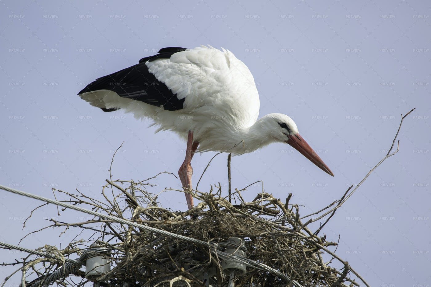Stork On Its Nest: Stock Photos