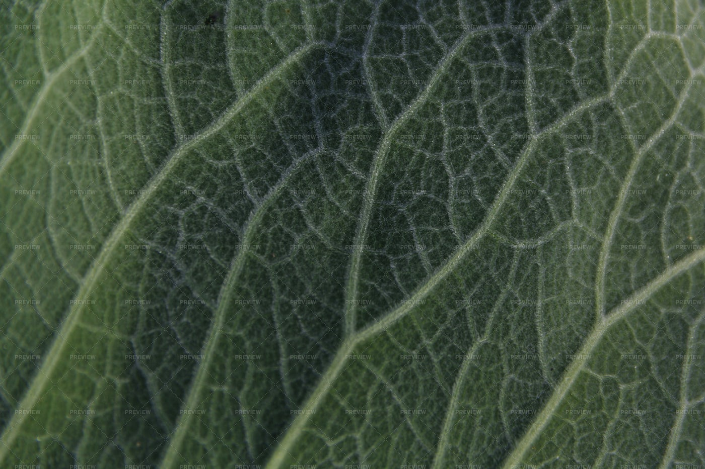 Green Leaf Texture Stock Photos Motion Array I will show you have to use an image with an alpha channel in blender 2.8 to only show the texture that you want to see. green leaf texture stock photos