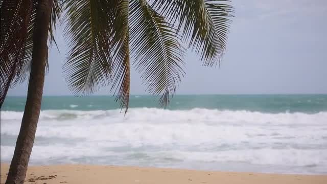 Tropical Paradise: Stock Video