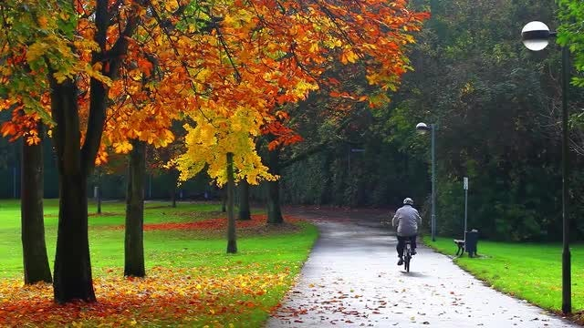 Park With Dreamy Leaves In The Autumn: Stock Video