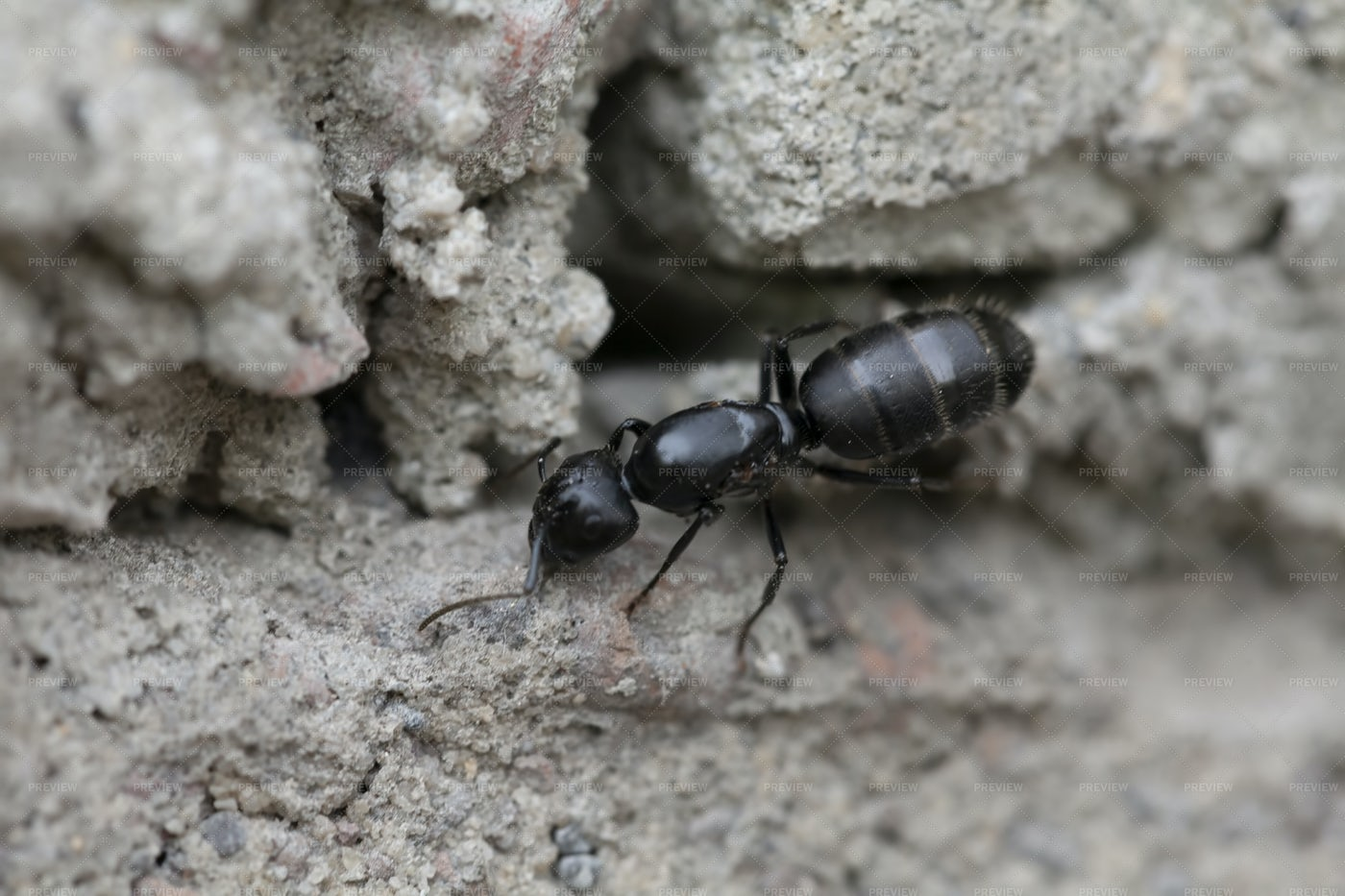 A Single Ant: Stock Photos