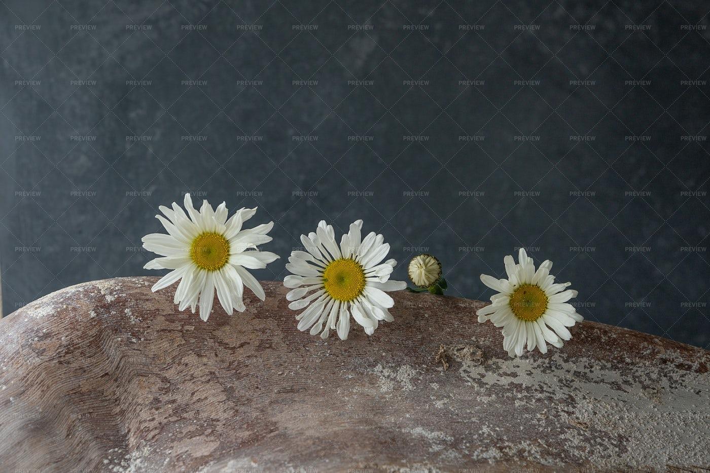 Chamomile Flowers: Stock Photos