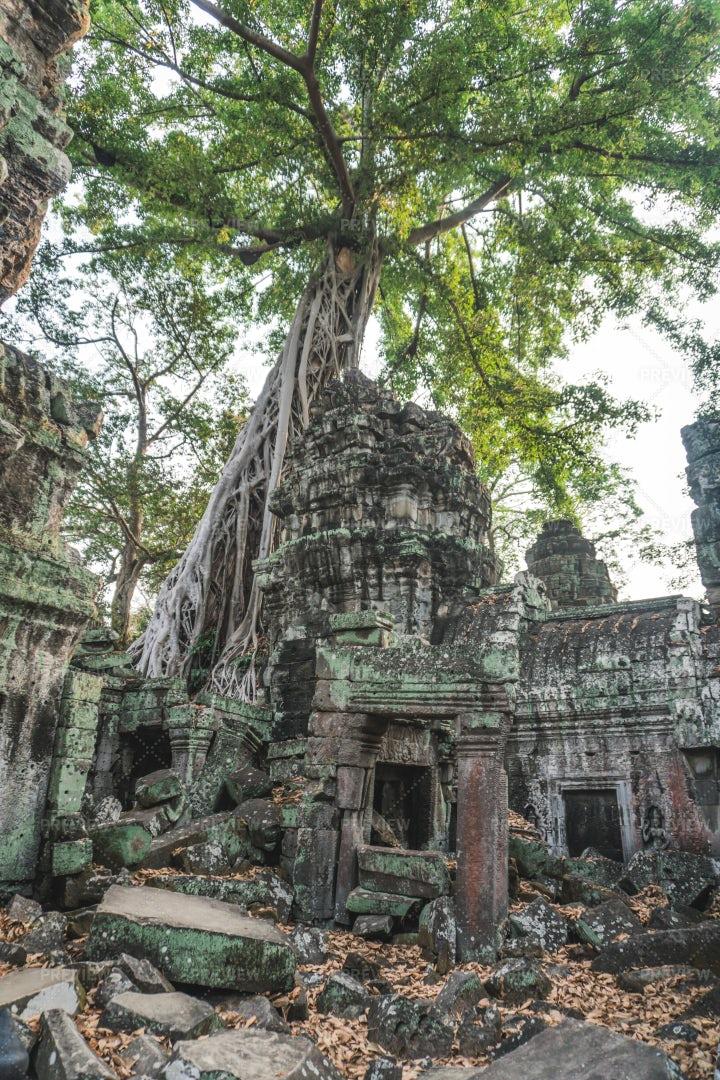 Ta Prohm Temple: Stock Photos