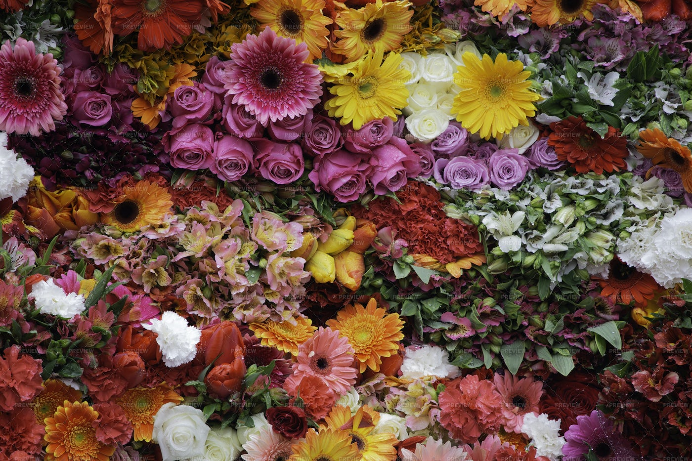 Vast Collection Of Flowers: Stock Photos