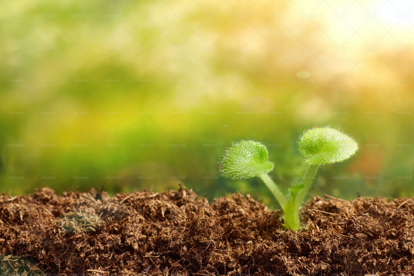 A Plant Sprouting: Stock Photos