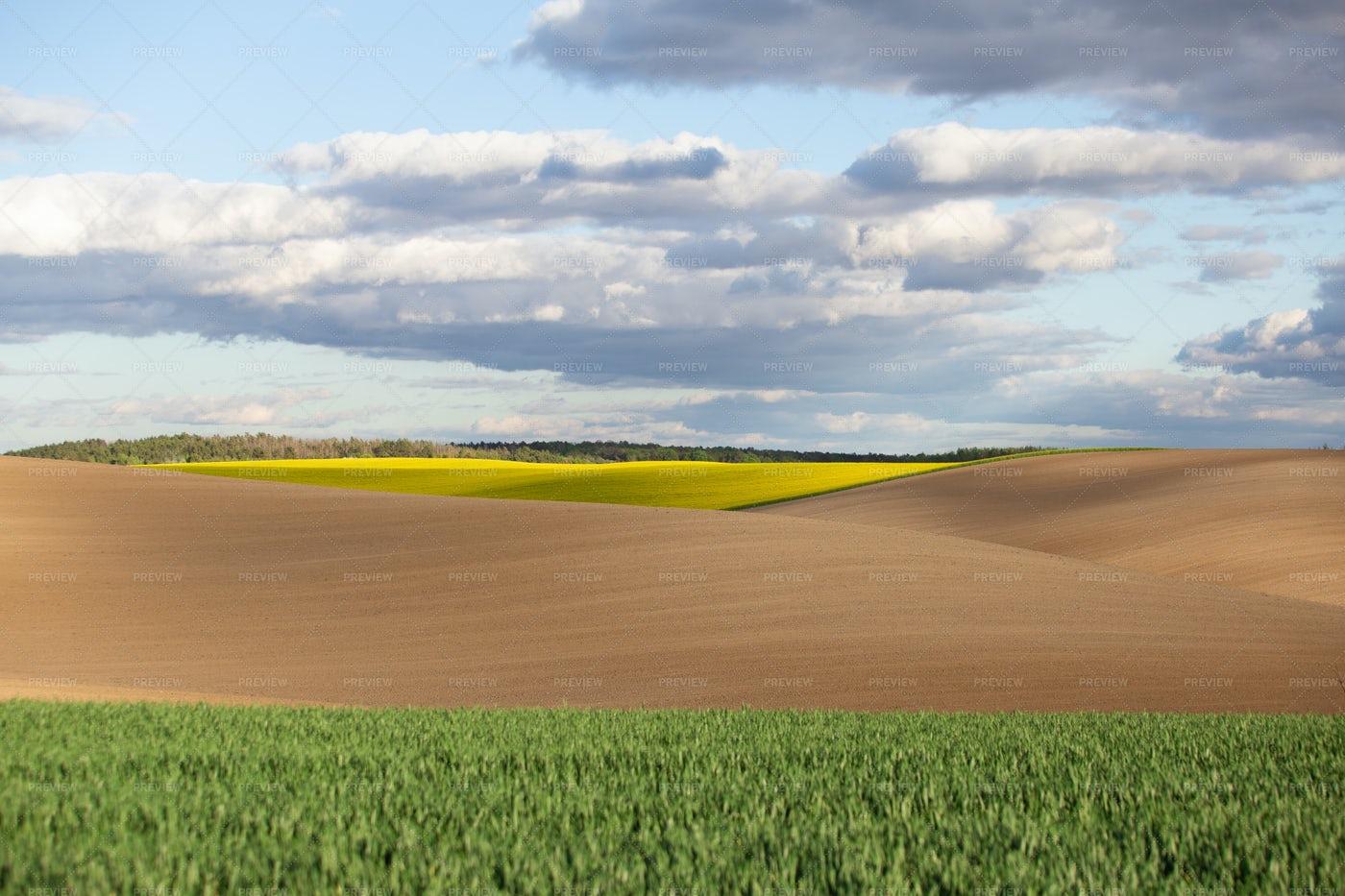 Vast Agricultural Fields: Stock Photos