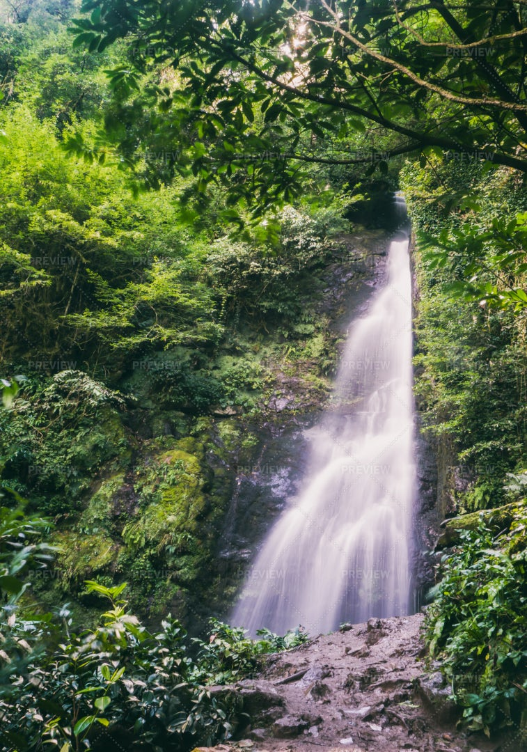 Forest And Waterfall: Stock Photos