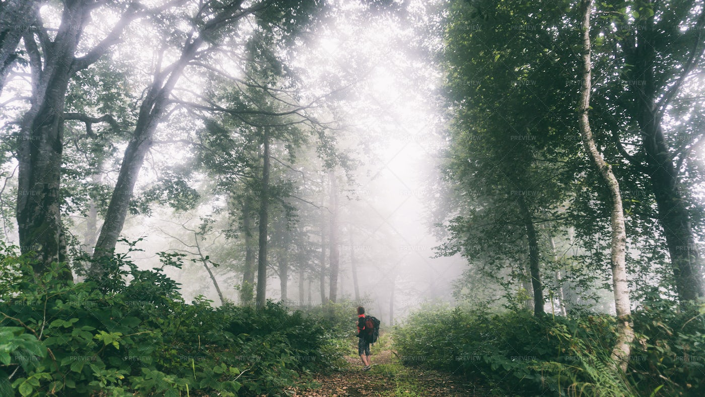 Woman In Misty Forest: Stock Photos