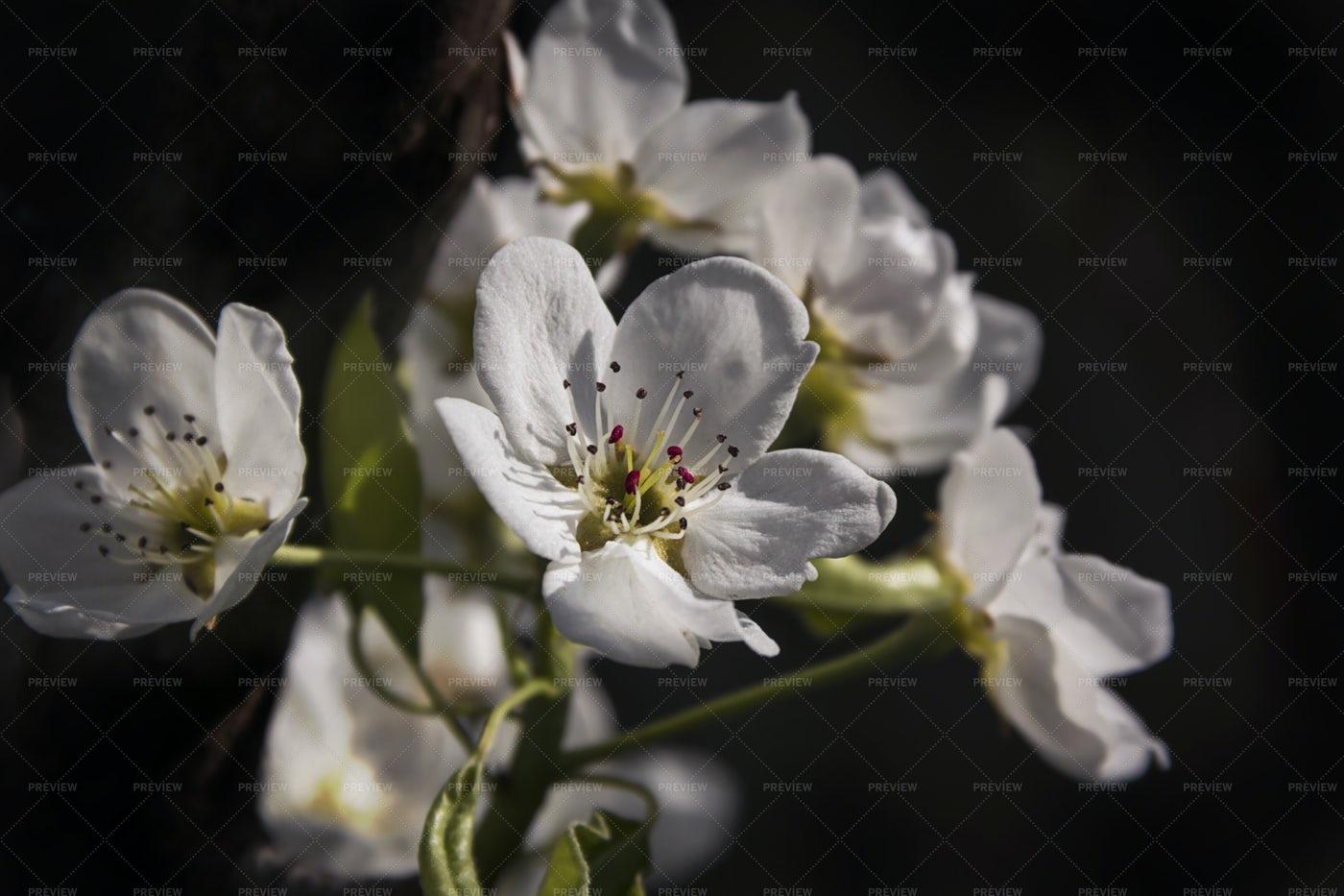 White Flowers: Stock Photos