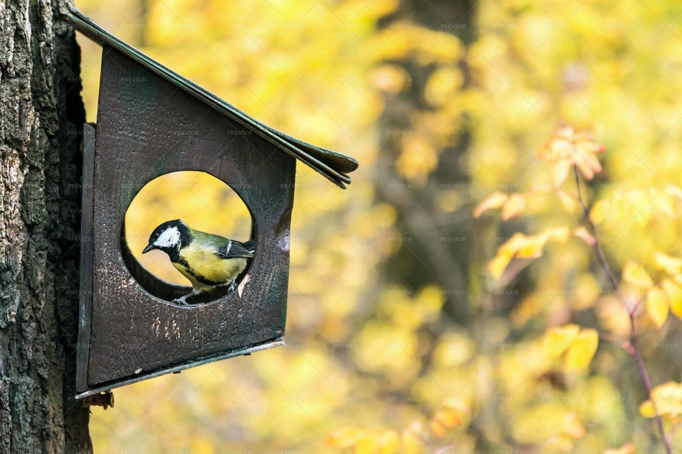 Bird Feeder: Stock Photos